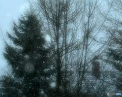 Snowfall Xmas Day