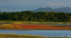 サンゴ草のある湖