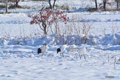 雪中の親子