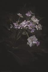 Serenity of amethysts -Ⅲ