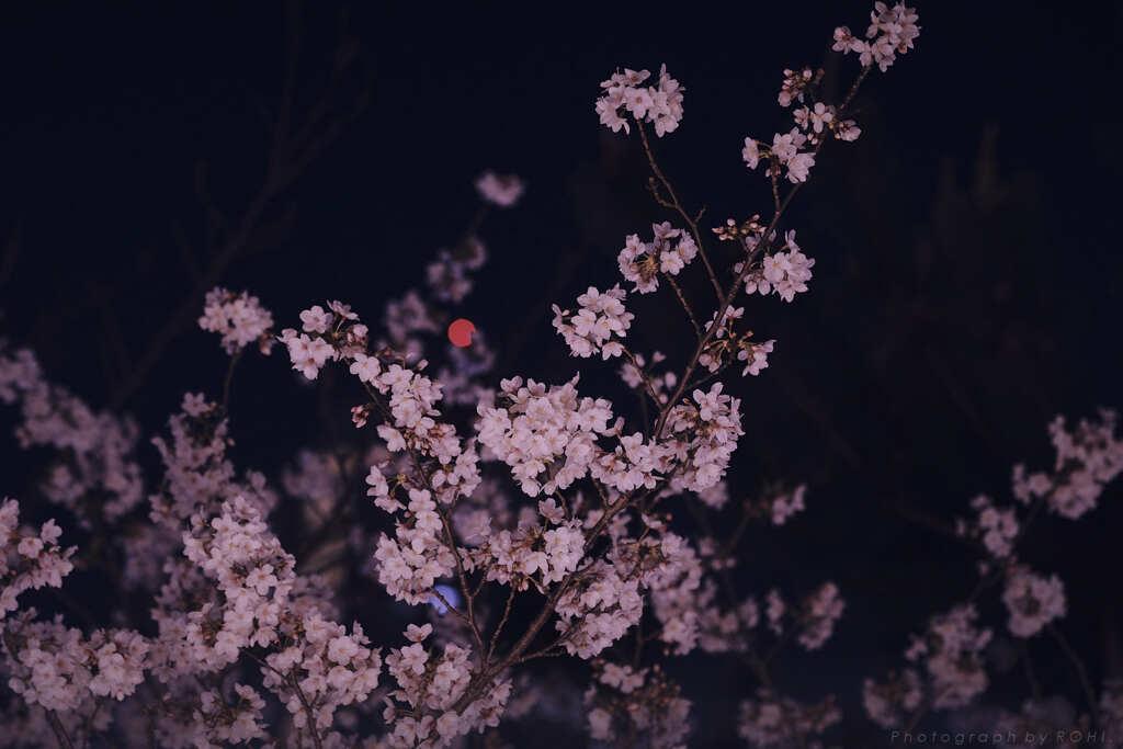 環宴愁 -5