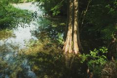 湿潤の沼陰