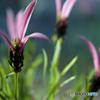 ストックホルムの花