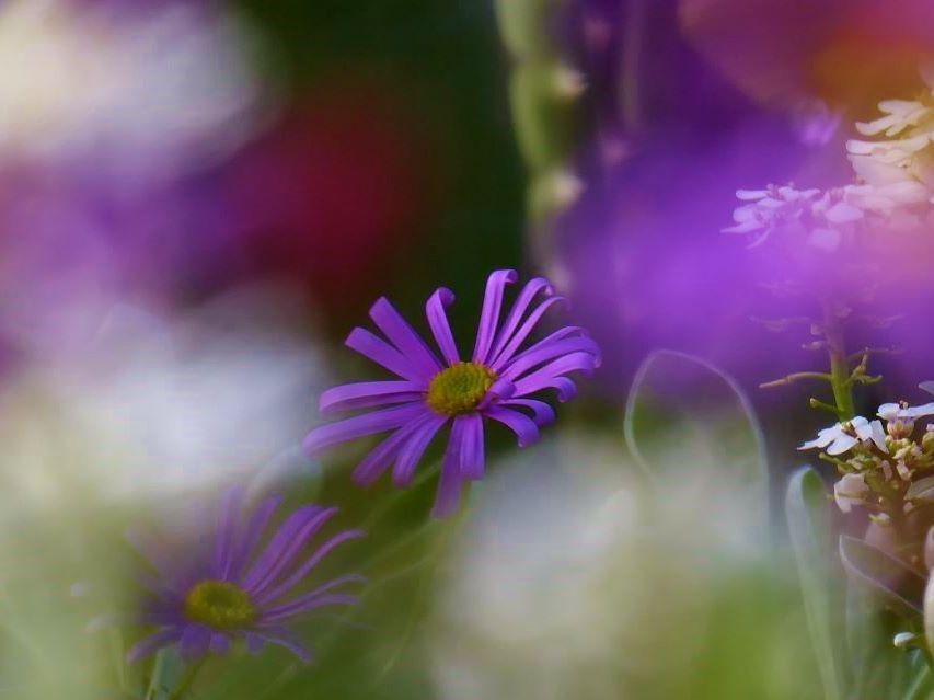 花の曼荼羅
