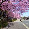 アタミ桜街道