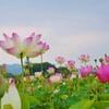 奈良天平の蓮