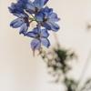 silent blue