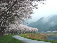 桜 時々・・・雨。