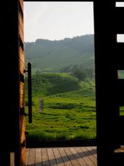 扉を開けると 緑の草原