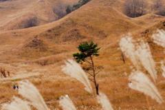 秋風吹く~ススキの草原~