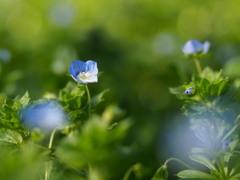 野に咲く花のように。。