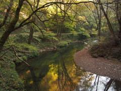 秋の森林浴。。