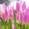 春の日差しに にっこり。