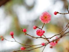 春よ来い..は~やくこい♪