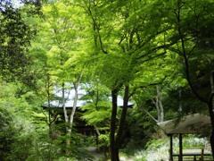 緑の中の山門