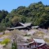 春の長谷寺2