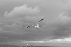 風に向かって