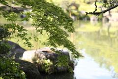 5月23日 相楽園 50