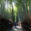 3月20日 京都嵐山 30