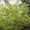 4月3日 岡本南公園 22