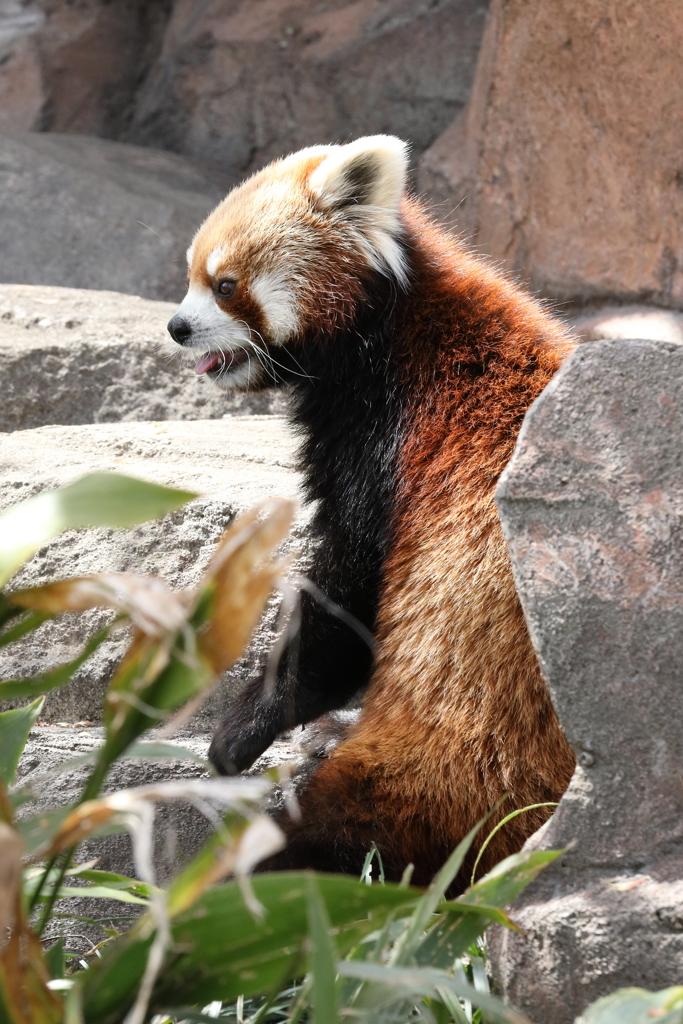 3月26日 王子動物園 8