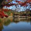 11月30日 奈良 5