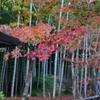 11月23日 京都 43
