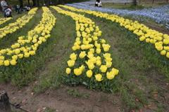 4月18日 万博記念公園 28