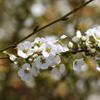 3月5日 岡本公園 39