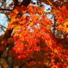 11月30日 奈良 27