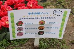 4月18日 万博記念公園 20