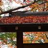 11月23日 京都 20