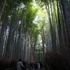 11月23日 京都 44