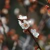 3月5日 岡本公園 21