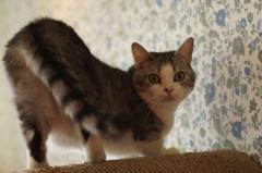 猫のポーズを練習するニャン♬