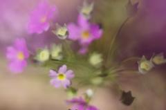 桜草のキャンドル・ホルダー