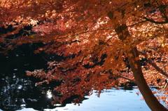 新宿の紅葉2