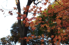 新宿の紅葉4