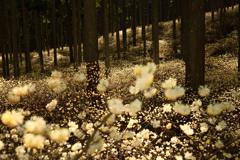 黄色い森の花