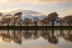 夕刻の桜並木