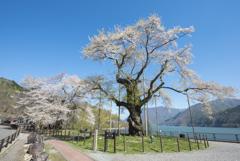 2018〆の桜