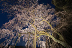 春の夜空を覆う