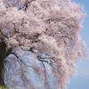 わに塚の春
