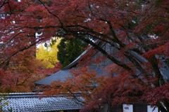 秋色に包まれ