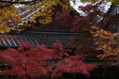 紅葉も色々