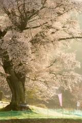 桜の根元の小さなほこら。