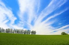 強風のマイルドセブンの丘(改)