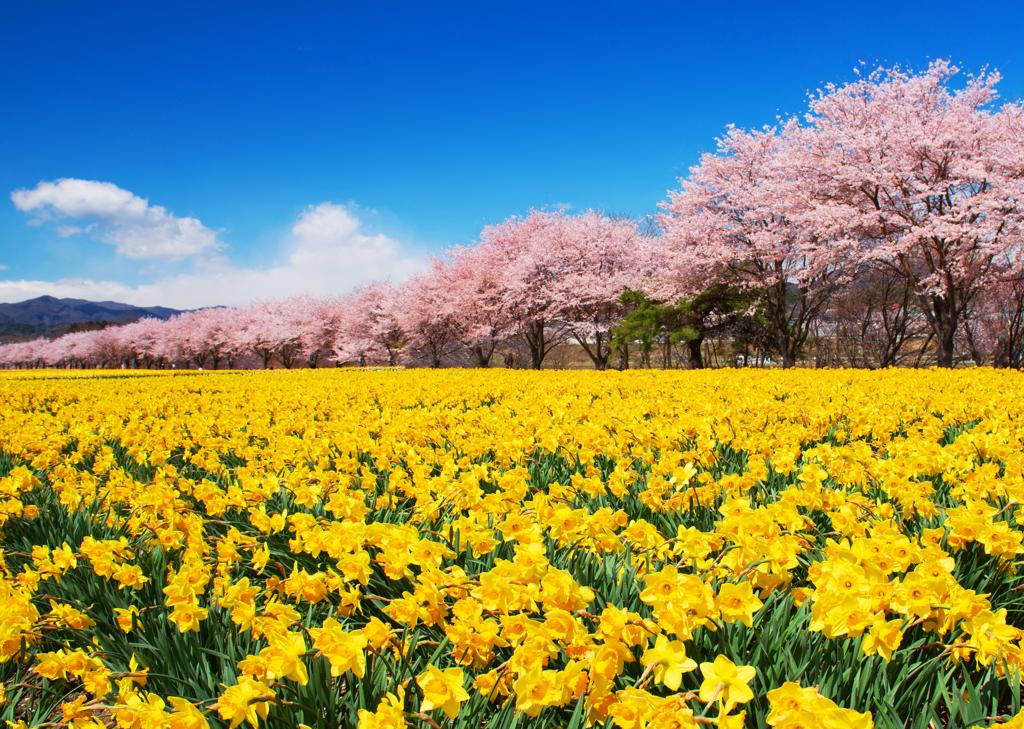 爽やかな春景をどうぞ!