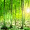 残雪残る新緑の美人林