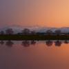 桜並木の夕焼け